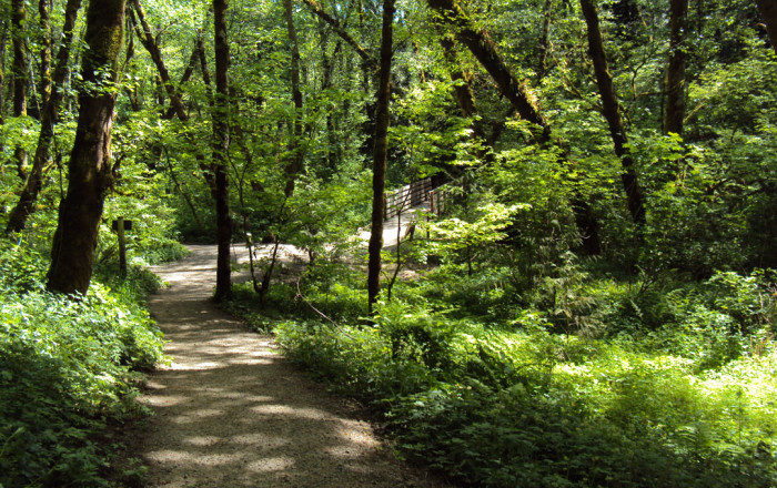 A trail in the park. Tryon Creek State Park offers 8 miles of hiking trails, 3.5 miles of horse t...