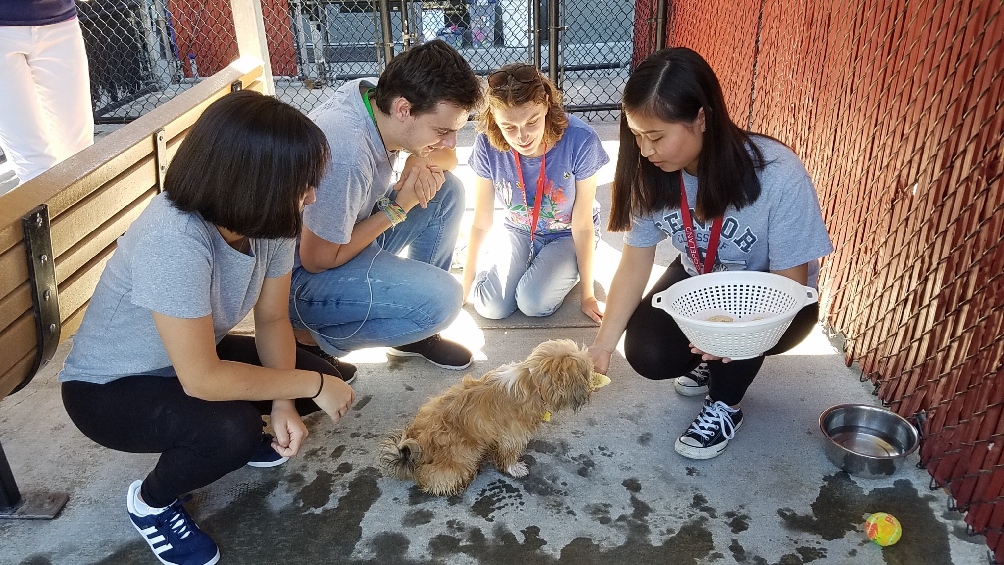 First-year students volunteer with Oregon Humane Society as part of New Student Orientation Servi...